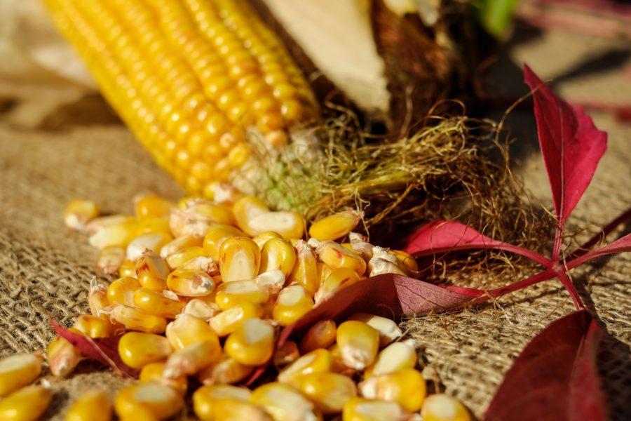 Five Grains of Corn