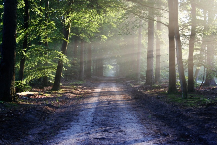 Roadmap for the Proverbs